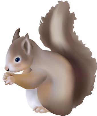 Red Squirrel clipart #4, Download drawings