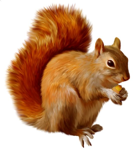 Red Squirrel clipart #18, Download drawings