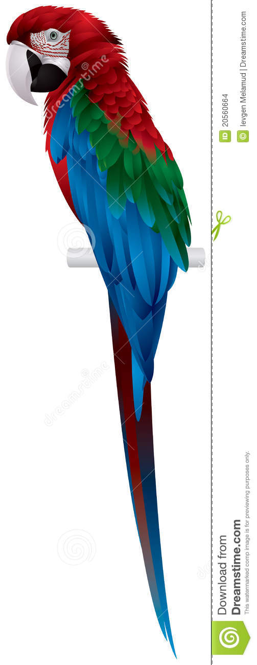 Red-and-green Macaw clipart #20, Download drawings