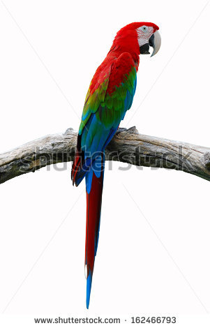 Red-and-green Macaw clipart #14, Download drawings