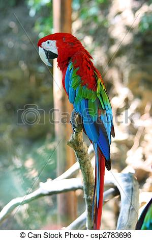Red-and-green Macaw clipart #2, Download drawings