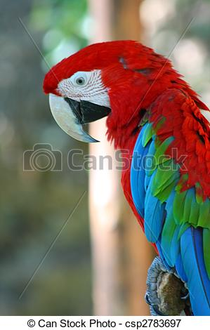 Red-and-green Macaw clipart #10, Download drawings