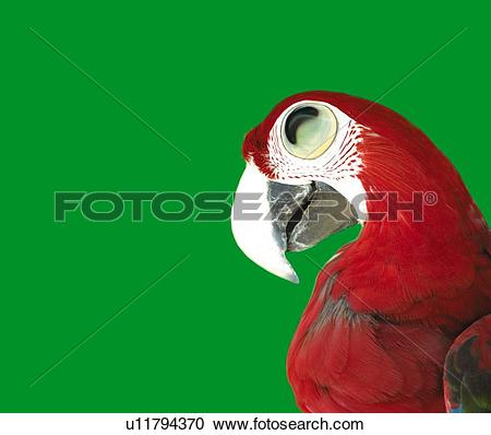 Red-and-green Macaw clipart #6, Download drawings