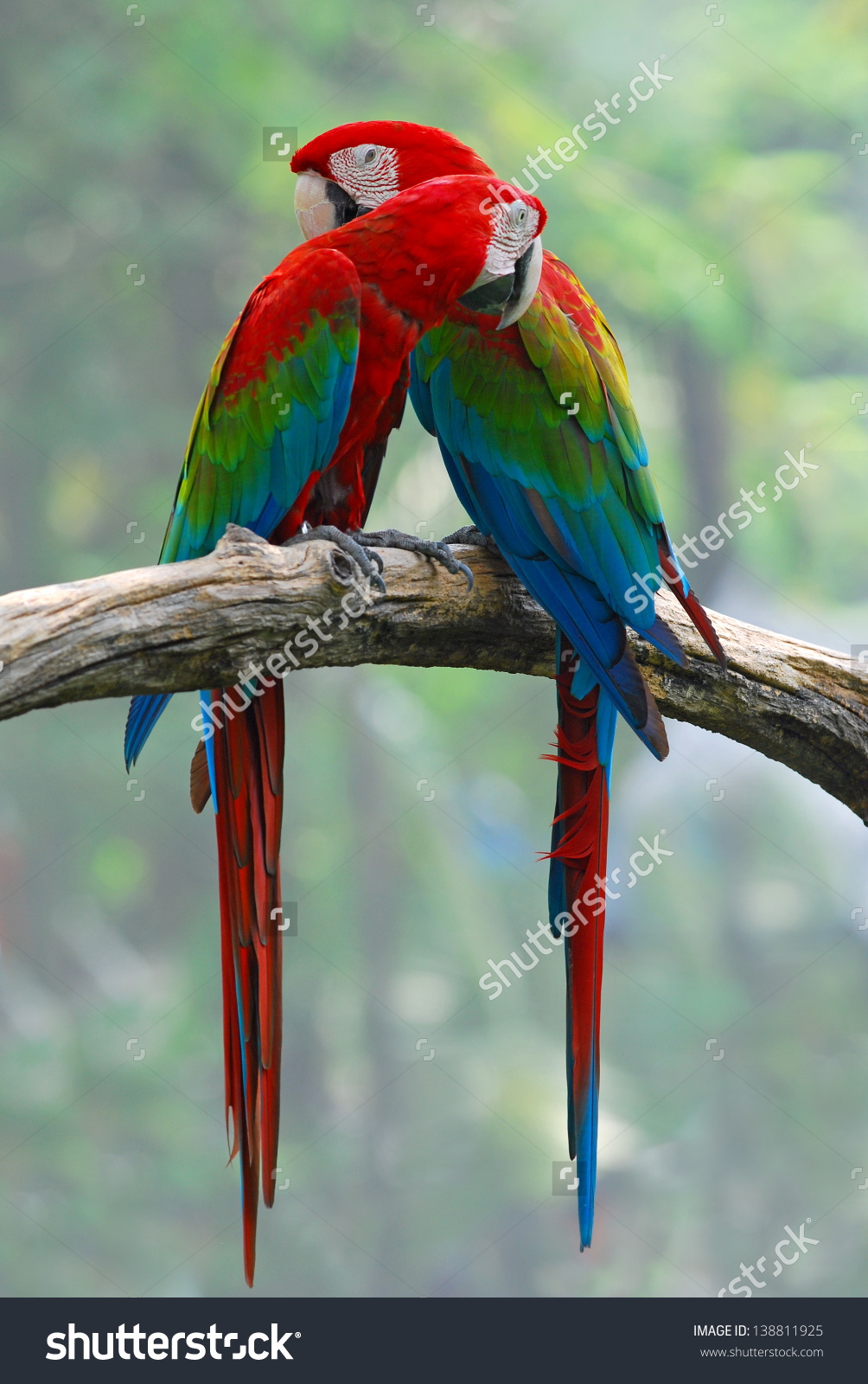 Red-and-green Macaw clipart #13, Download drawings