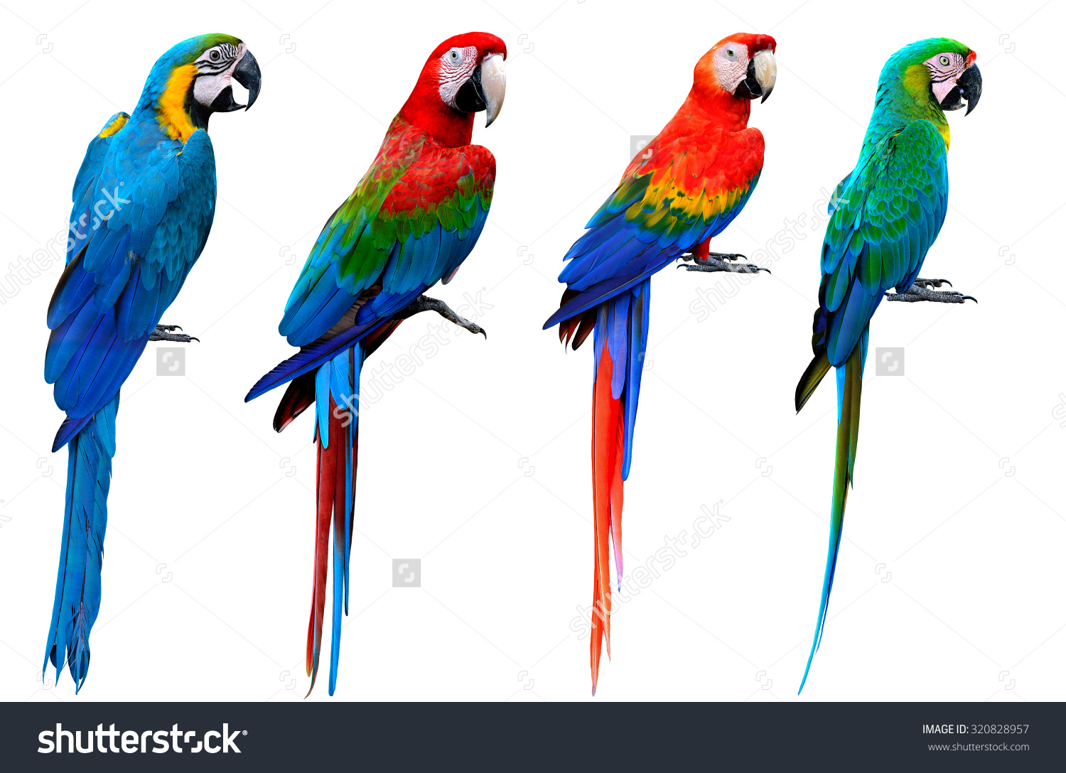 Red-and-green Macaw clipart #8, Download drawings