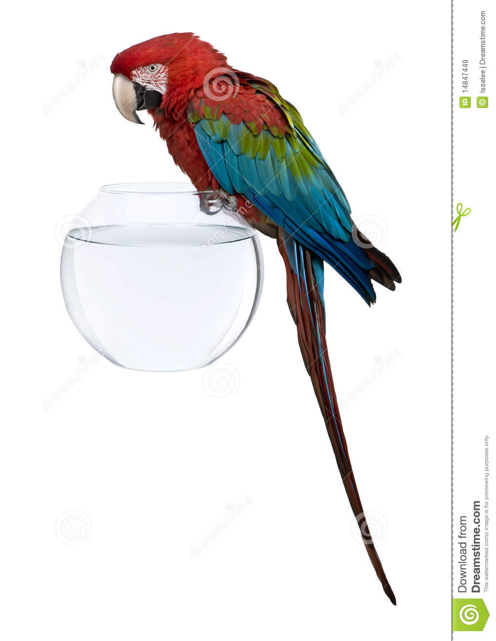 Red-and-green Macaw clipart #17, Download drawings