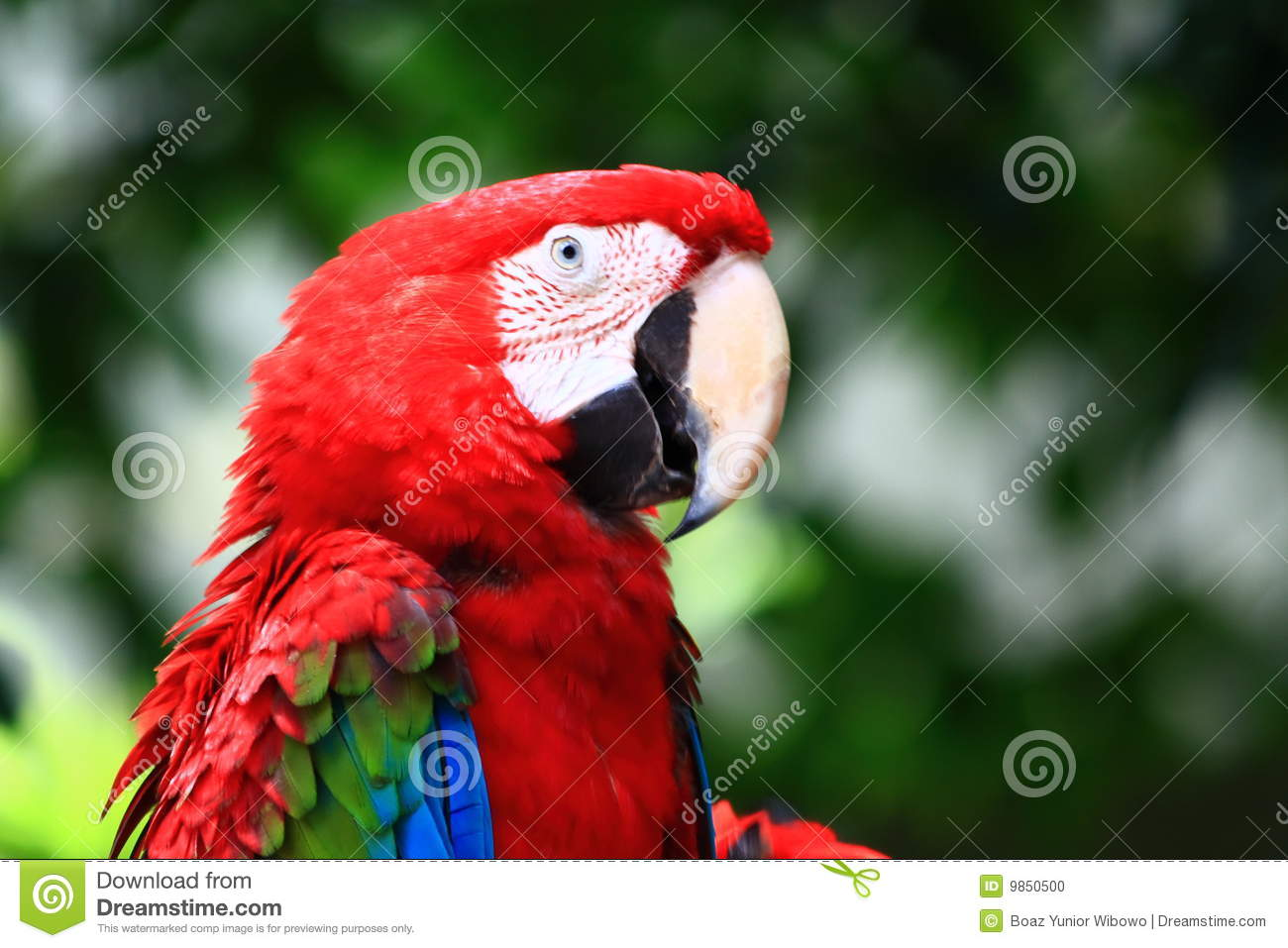 Red-and-green Macaw clipart #15, Download drawings