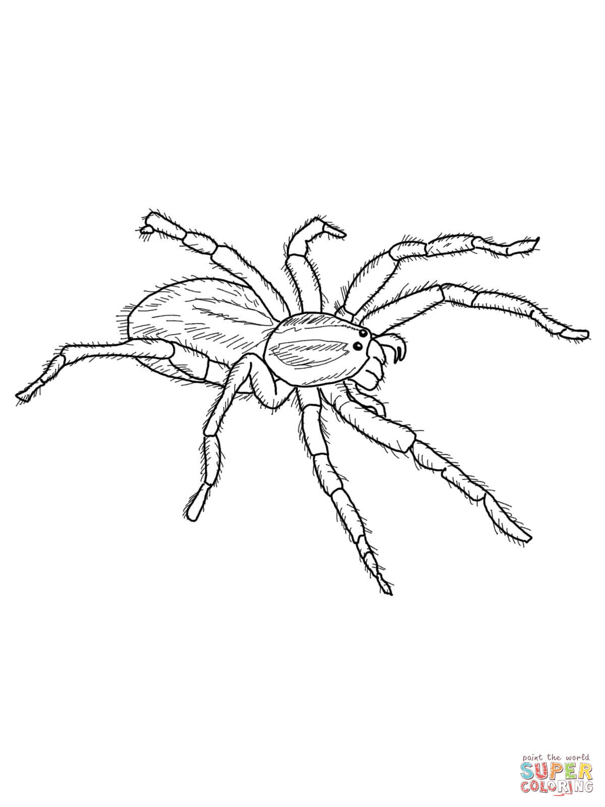 Redback Spider coloring #12, Download drawings