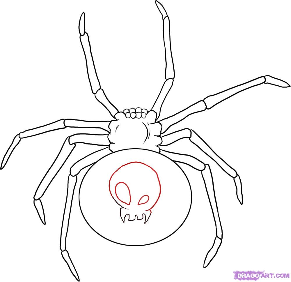 Redback Spider coloring #17, Download drawings