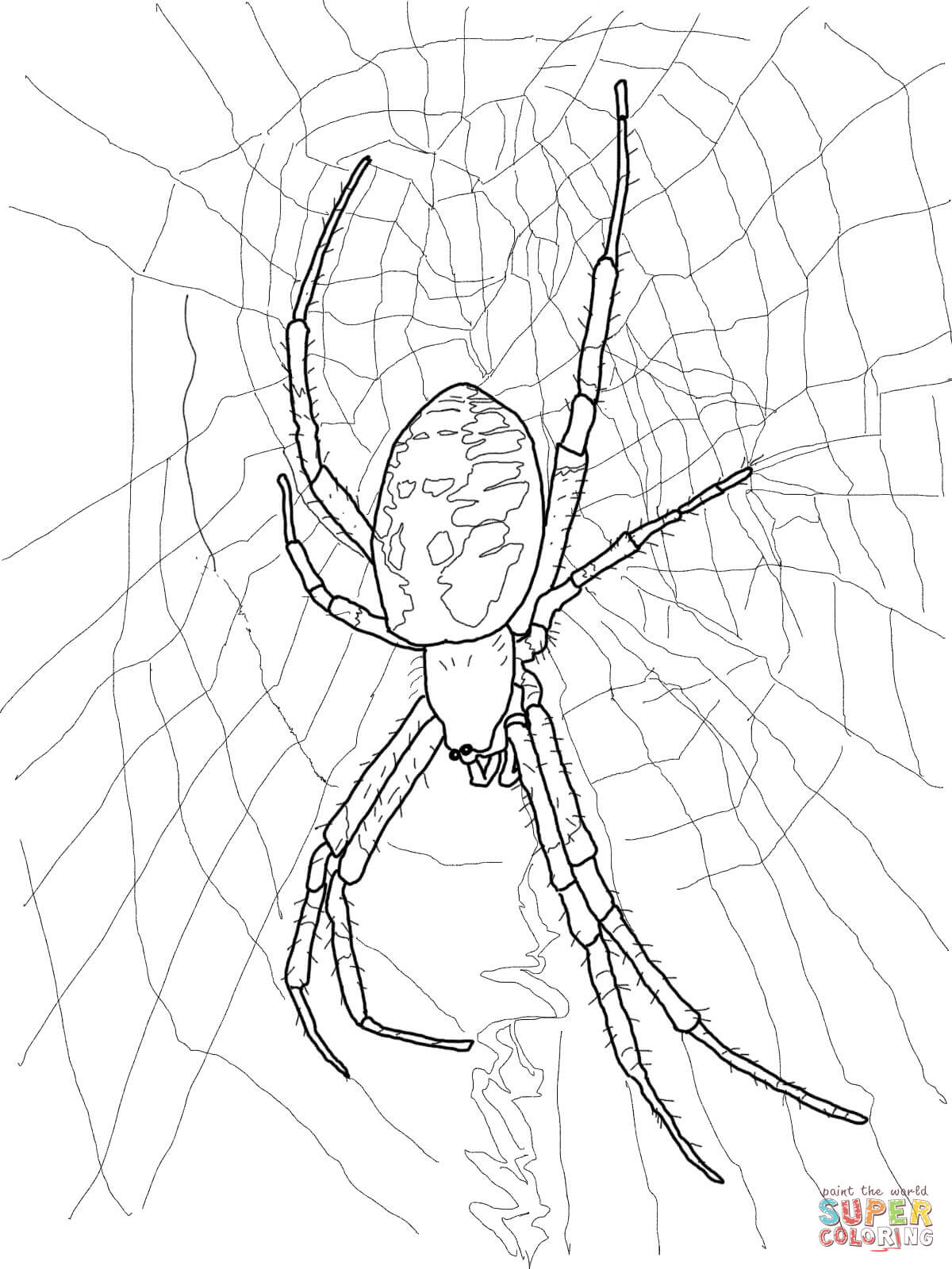 Redback Spider coloring #11, Download drawings