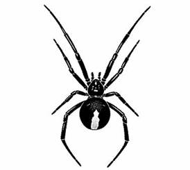 Redback Spider coloring #5, Download drawings