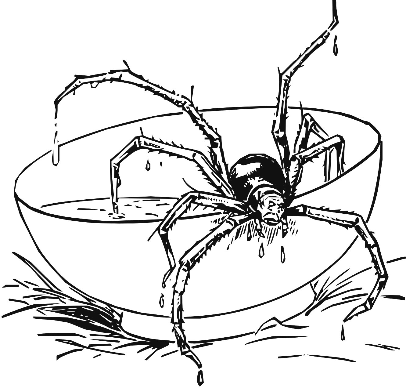 Redback Spider coloring #18, Download drawings