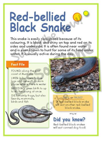 Red-bellied Black Snake clipart #6, Download drawings