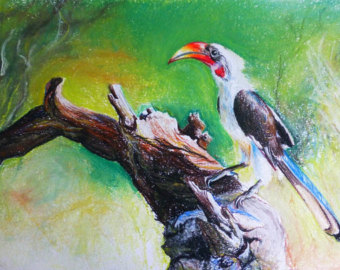 Red-billed Hornbill coloring #15, Download drawings