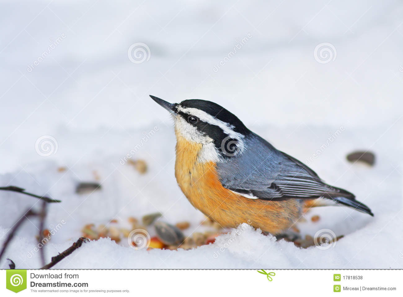 Red-breasted Nuthatch clipart #13, Download drawings
