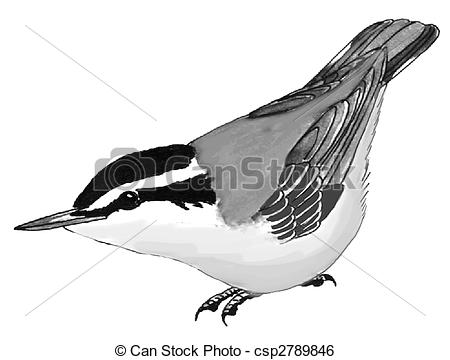 Red-breasted Nuthatch clipart #17, Download drawings