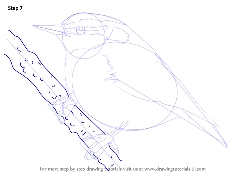 Red-breasted Nuthatch coloring #2, Download drawings