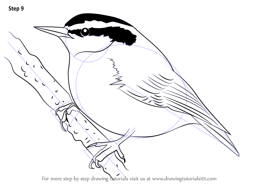 Red-breasted Nuthatch coloring #4, Download drawings