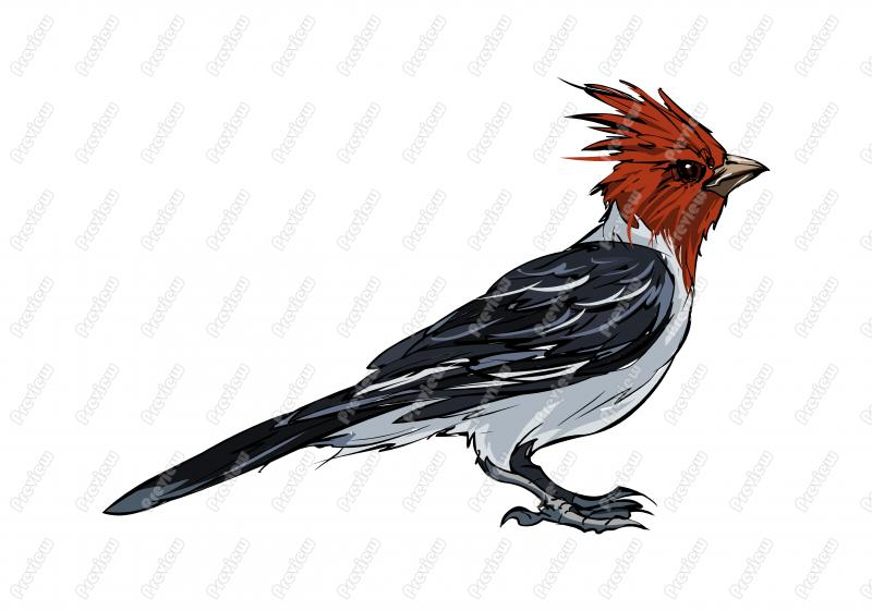Red-Crested Cardinal clipart #20, Download drawings