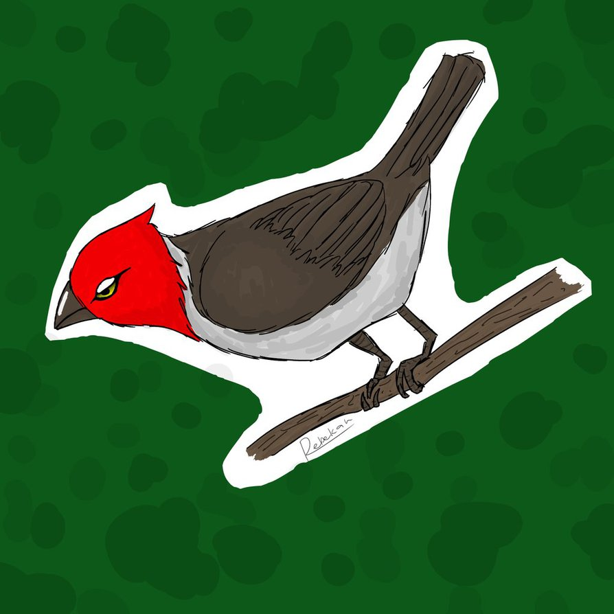 Red-Crested Cardinal clipart #4, Download drawings