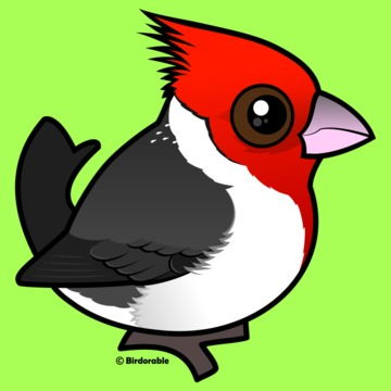 Red-Crested Cardinal clipart #9, Download drawings