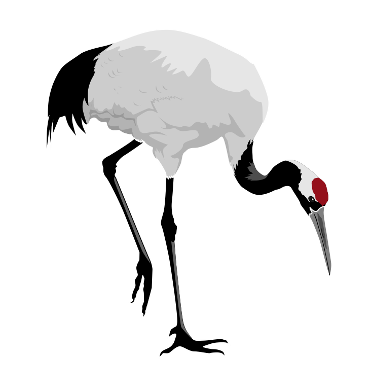 Red-crowned Crane clipart #1, Download drawings
