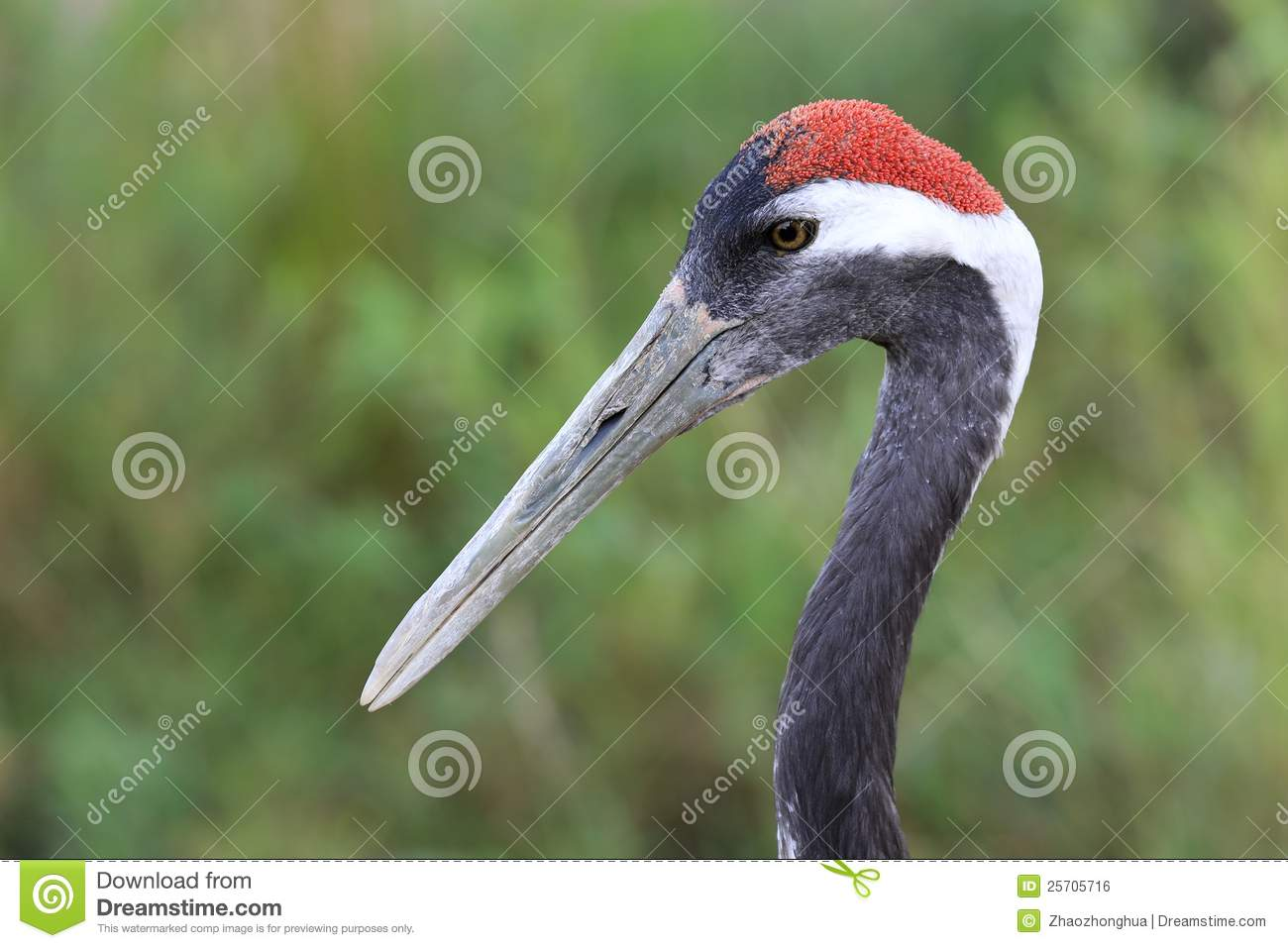 Red-crowned Crane clipart #3, Download drawings