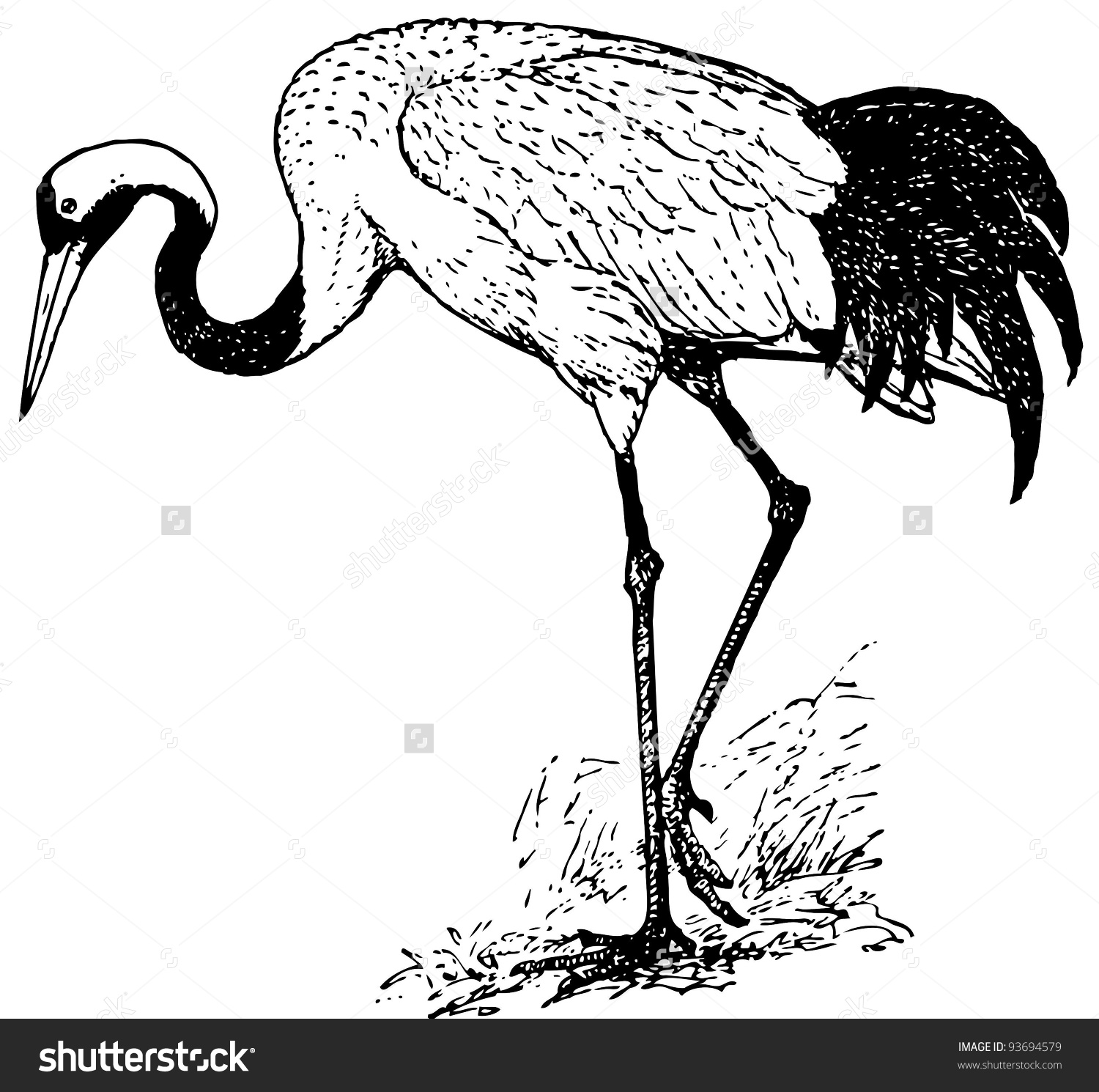 Red-crowned Crane clipart #19, Download drawings