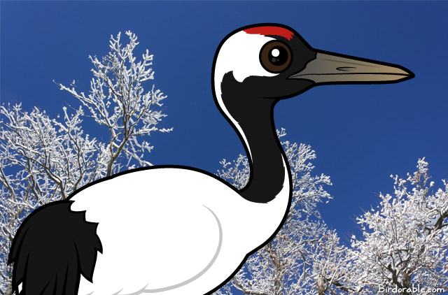Red-crowned Crane coloring #15, Download drawings
