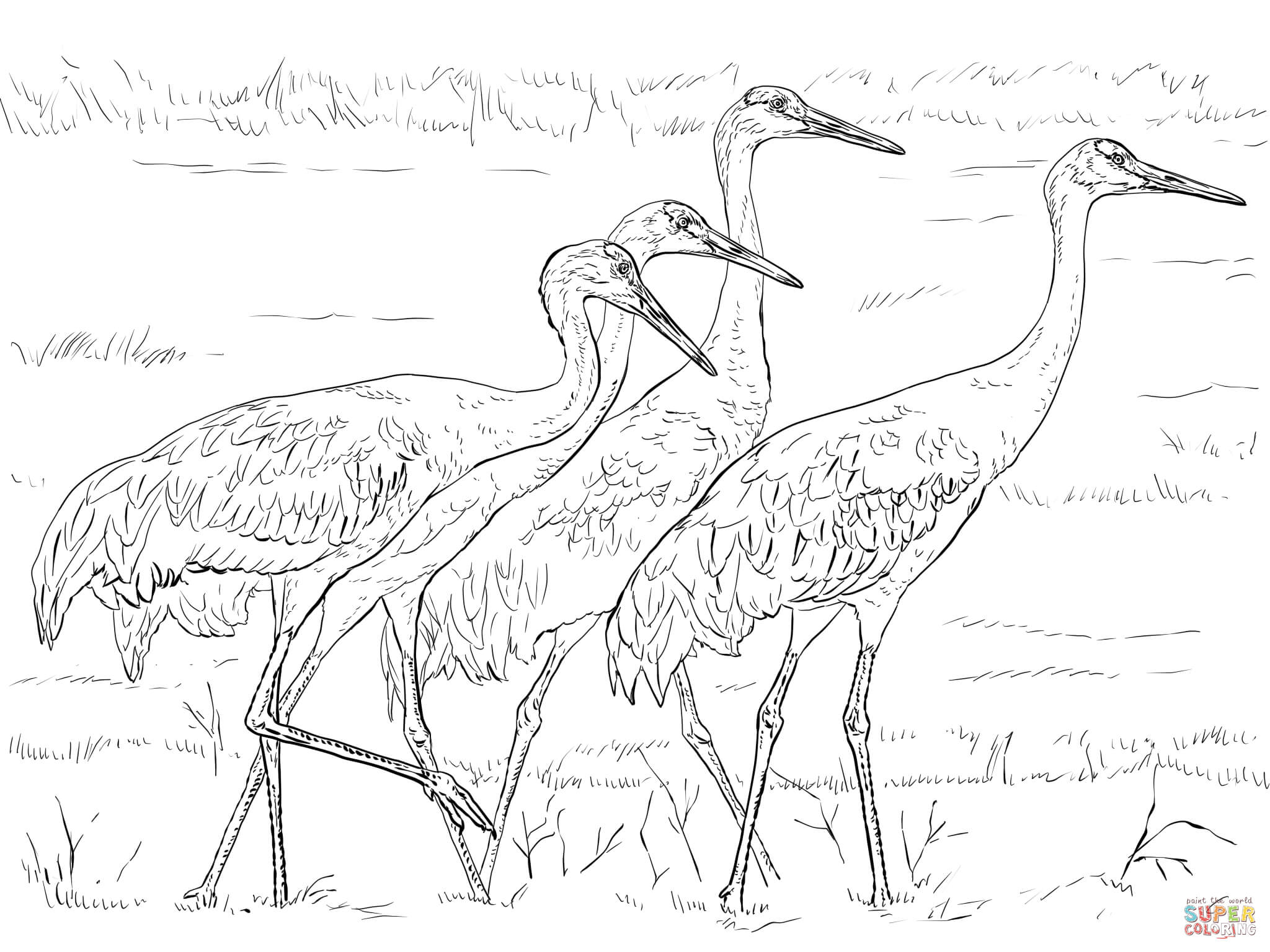 Red-crowned Crane coloring #2, Download drawings