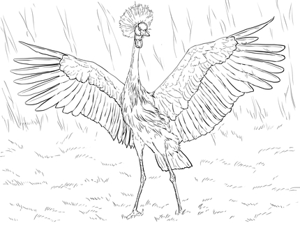 Red-crowned Crane coloring #3, Download drawings