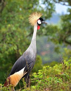 Red-crowned Crane svg #10, Download drawings