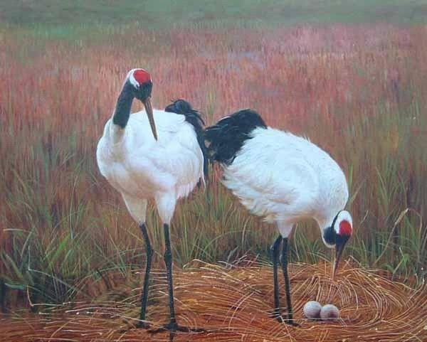 Red-crowned Crane svg #11, Download drawings