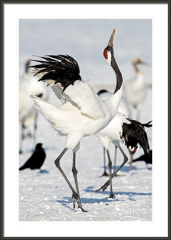 Red-crowned Crane svg #16, Download drawings