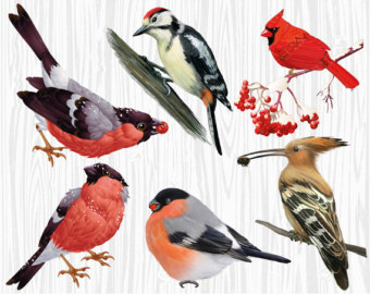 Red-masked Finch clipart #19, Download drawings