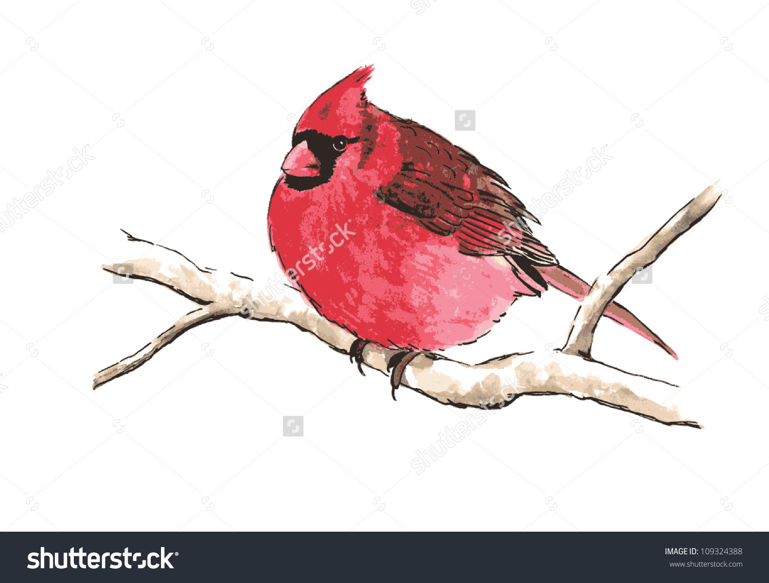 Red-masked Finch clipart #8, Download drawings