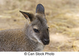 Red-necked Wallaby clipart #4, Download drawings