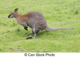 Red-necked Wallaby clipart #15, Download drawings