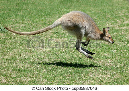 Red-necked Wallaby clipart #18, Download drawings