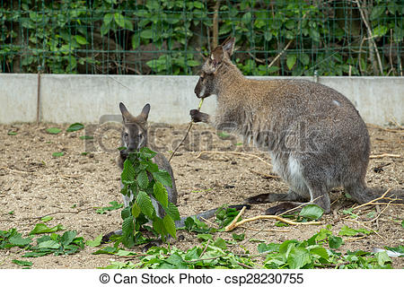 Red-necked Wallaby clipart #11, Download drawings