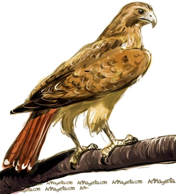 Red-tailed Hawk clipart #13, Download drawings
