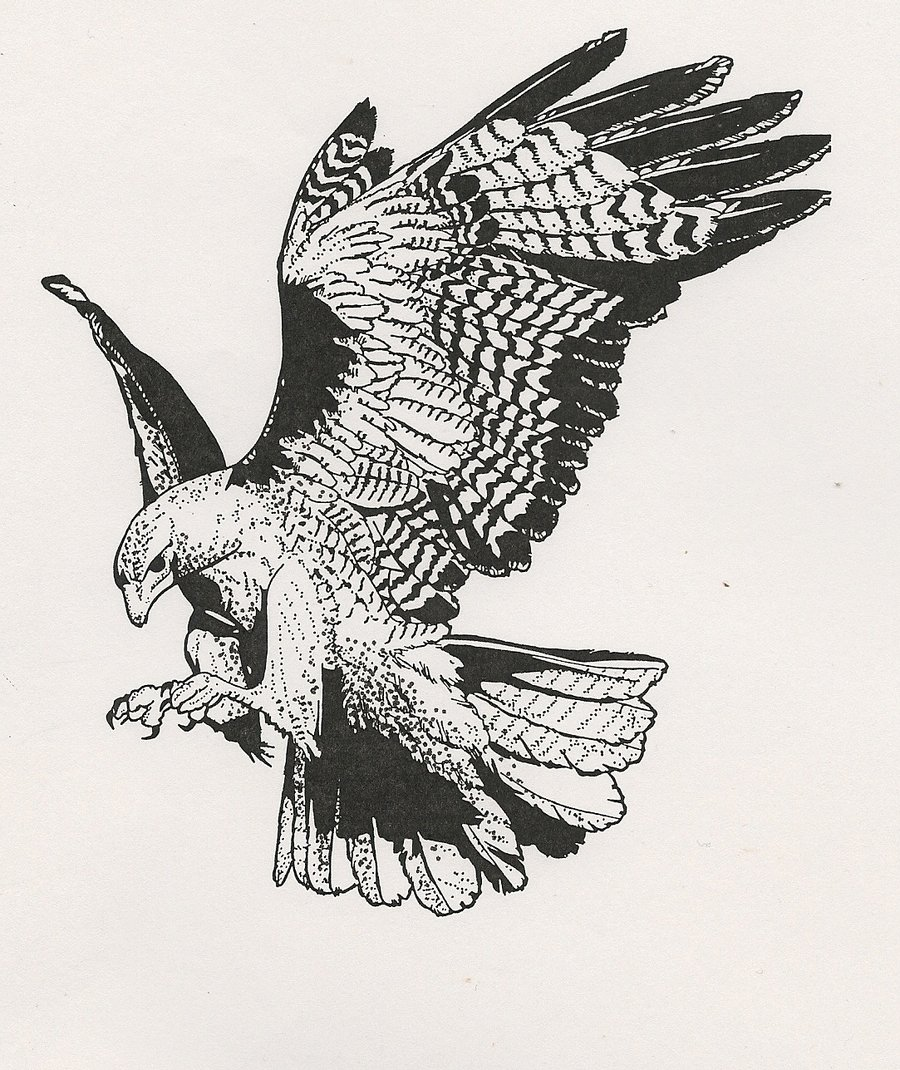 Red-tailed Hawk clipart #2, Download drawings