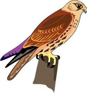 Red-tailed Hawk clipart #12, Download drawings