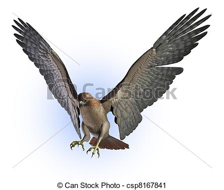 Red-tailed Hawk clipart #5, Download drawings