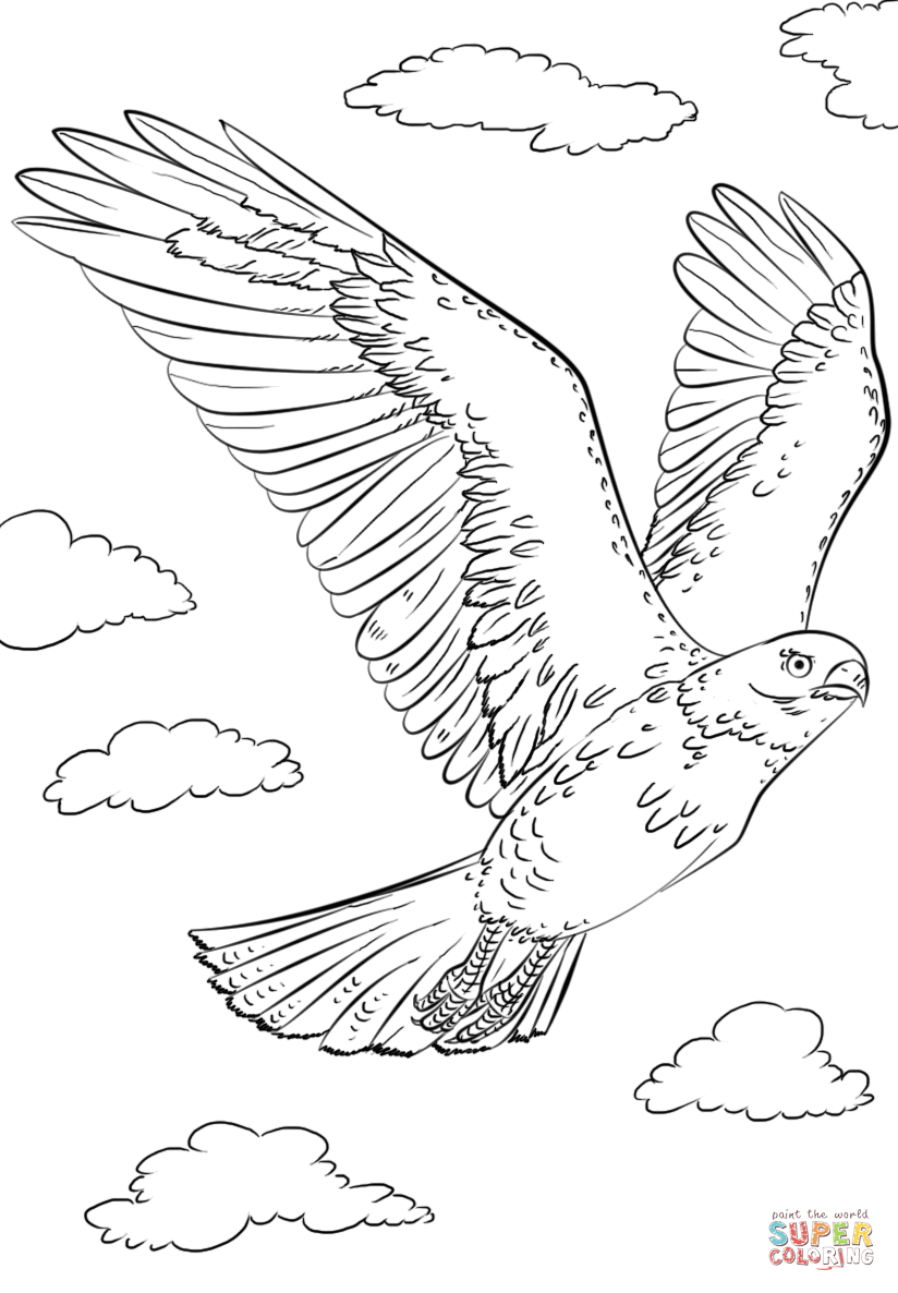 Red-tailed Hawk coloring #11, Download drawings