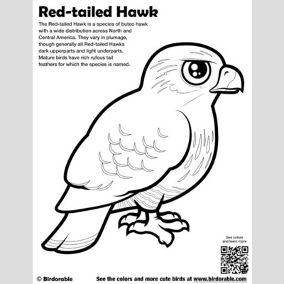 Red-tailed Hawk coloring #18, Download drawings