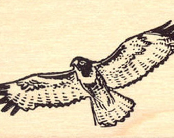 Red-tailed Hawk svg #10, Download drawings