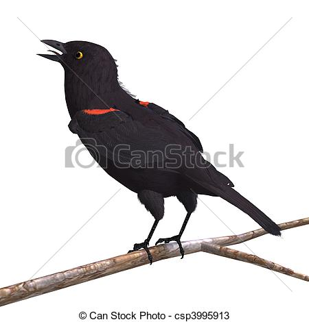 Red-winged Blackbird clipart #13, Download drawings