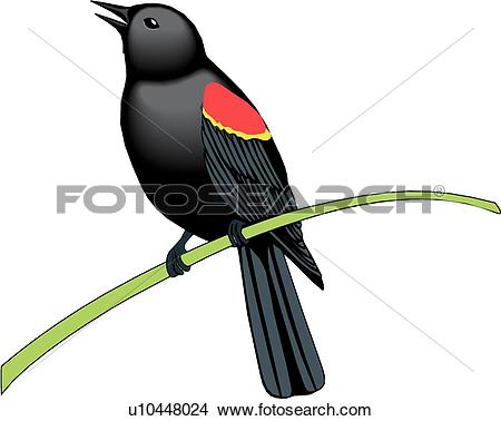 Red-winged Blackbird clipart #18, Download drawings