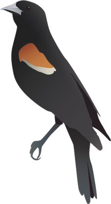Red-winged Blackbird svg #20, Download drawings